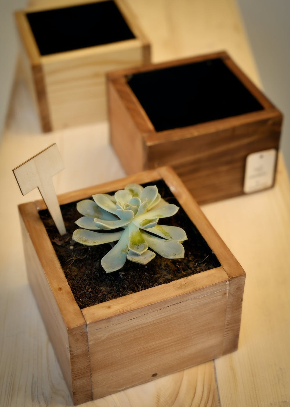 Tall Cube Planter - 6 Inches